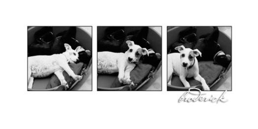 3-dogs-series.jpg