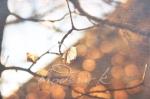 autum leaf