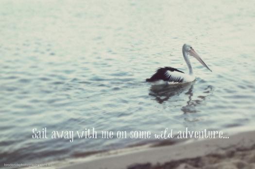 broderick_photography_pelican
