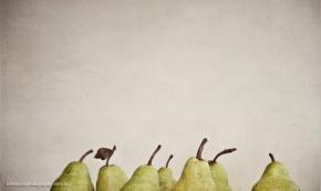 eight pears still life