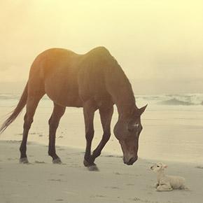 broderick-photography-horse-lamb